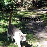 Adopt A Pet :: Antonio - Naples, FL