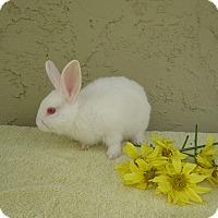 Adopt A Pet :: Pasta - Bonita, CA