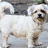 Adopt A Pet :: Spots - Norwalk, CT