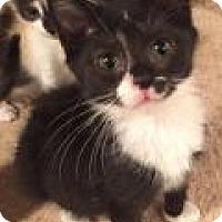 Adopt A Pet :: Murphy - East Hanover, NJ