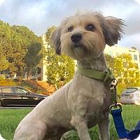 Adopt A Pet :: Sally - Mission Viejo, CA