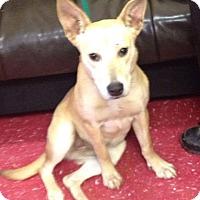 Adopt A Pet :: Casey - Pompton Lakes, NJ