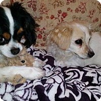 Adopt A Pet :: Pugsley and Buffy - Columbia, MD
