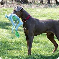 Adopt A Pet :: AUDIE - Greensboro, NC