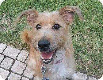 Terrier (Unknown Type, Medium) Mix Dog for adoption in Jacksonville, Florida - Olivia