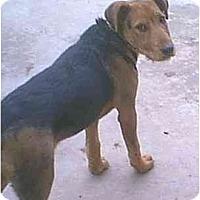 Adopt A Pet :: Stormy - dewey, AZ