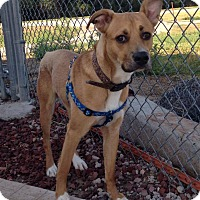 Adopt A Pet :: Krisco - Alliance, NE
