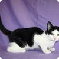 Adopt A Pet :: Keno - Powell, OH