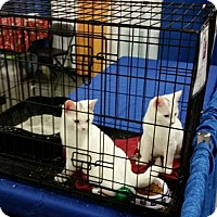 Adopt A Pet :: Holly & Jolly - Concord, NC