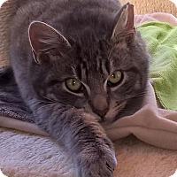 Adopt A Pet :: Kadiddlehopper - Freehold, NJ