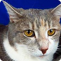 Adopt A Pet :: Lightning Bug - Sherwood, OR