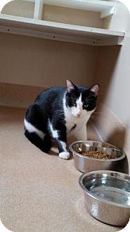 Domestic Shorthair Cat for adoption in Cumming, Georgia - Banner