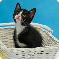 Adopt A Pet :: Arthur - Houston, TX