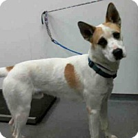 Adopt A Pet :: DIESEL - Tulsa, OK