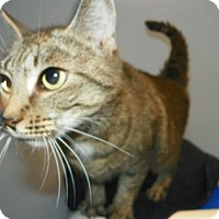 Adopt A Pet :: Lilo - Lowell, MA