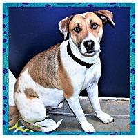 Adopt A Pet :: Sasha - San Jacinto, CA