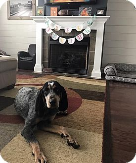 Bluetick Coonhound Dog for adoption in Sweetwater, Tennessee - Emil Muzz