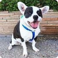Adopt A Pet :: Vito - Santa Cruz, CA
