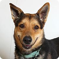 Adopt A Pet :: Churro - Walnut Creek, CA