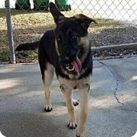 Adopt A Pet :: Nala - Loxahatchee, FL