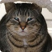 Adopt A Pet :: Roo >^.,.^< $50 adoption - Union Lake, MI