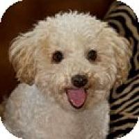 Adopt A Pet :: Jordy - La Costa, CA