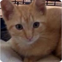 Adopt A Pet :: Reese - Jacksonville, FL
