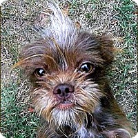 Adopt A Pet :: DIDDY - ADOPTION PENDING - Little Rock, AR
