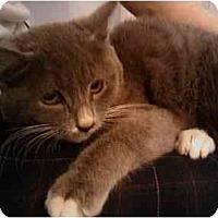 Adopt A Pet :: Charlotte - Wakinsville, GA