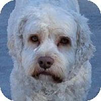 Adopt A Pet :: Charger - La Costa, CA