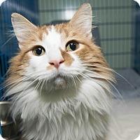 Adopt A Pet :: Remington - New York, NY