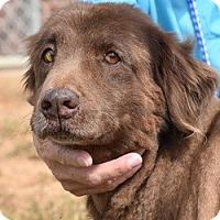 Adopt A Pet :: Brandy - New Canaan, CT