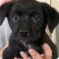 Adopt A Pet :: Funfetti - Evergreen, CO