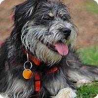 Adopt A Pet :: Liberty-Adoption Pending - Pinehurst, NC