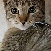Adopt A Pet :: Zoey - Monrovia, CA