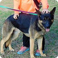 Adopt A Pet :: Zayden - Greeneville, TN