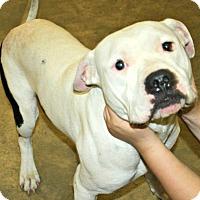 Adopt A Pet :: Jackson - Richland Hills, TX
