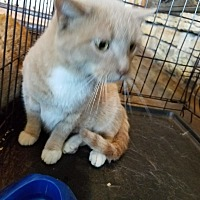Adopt A Pet :: James - Hainesville, IL