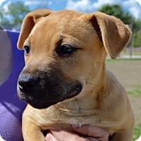 Adopt A Pet :: Chloe - Allen town, PA