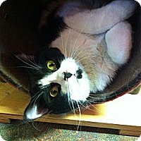 Adopt A Pet :: Desi - Topeka, KS