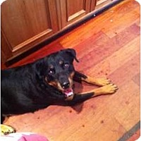 Adopt A Pet :: Paige - Brewster, NY
