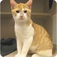 Adopt A Pet :: Keebler - Mesa, AZ