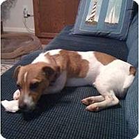 Adopt A Pet :: MIlo Emerson in Houston - Houston, TX