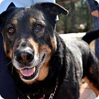 Adopt A Pet :: Oliver - Framingham, MA