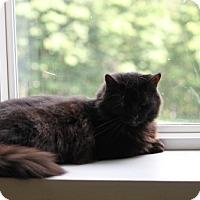 Adopt A Pet :: White Lightening - East Smithfield, PA