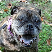 Adopt A Pet :: Leah - Prospect, CT
