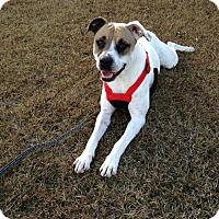 Adopt A Pet :: Duchess - Marianna, FL