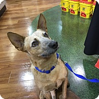 Adopt A Pet :: FOXY - Palm City, FL