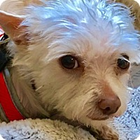 Adopt A Pet :: Noah - Boulder, CO