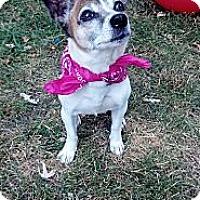 Adopt A Pet :: Firefly- Adopted!! - Jackson, MI